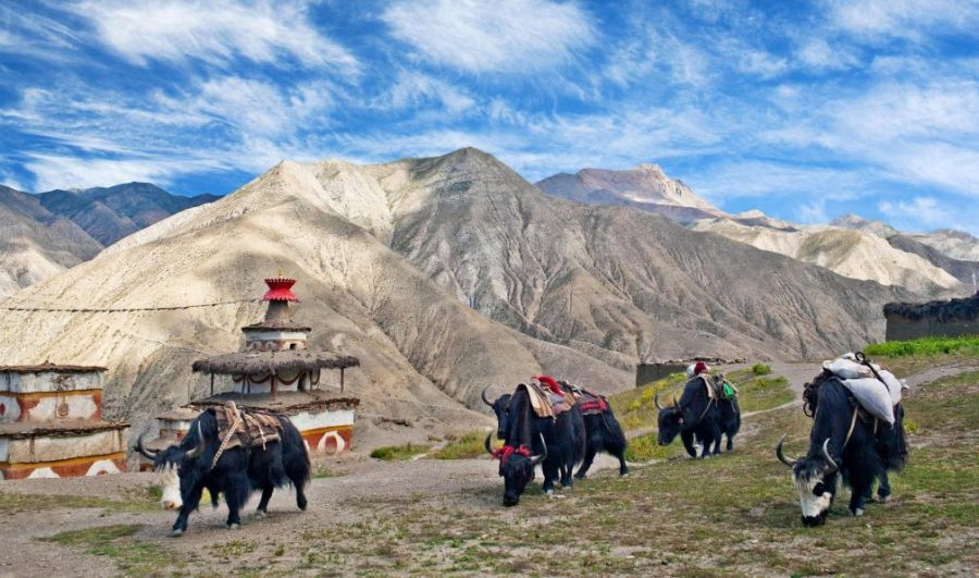 Autumn Dolpo Region Trek